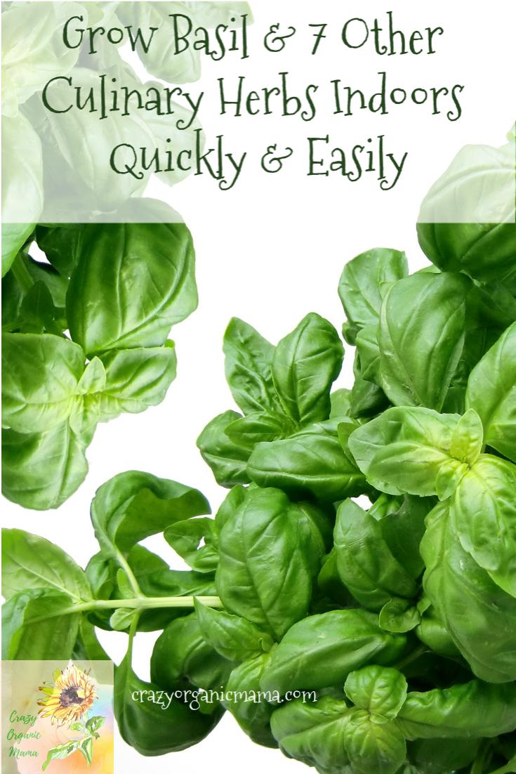 Growing Indoor Herbs Cooking With Fresh Herbs Herbs 400 x 300