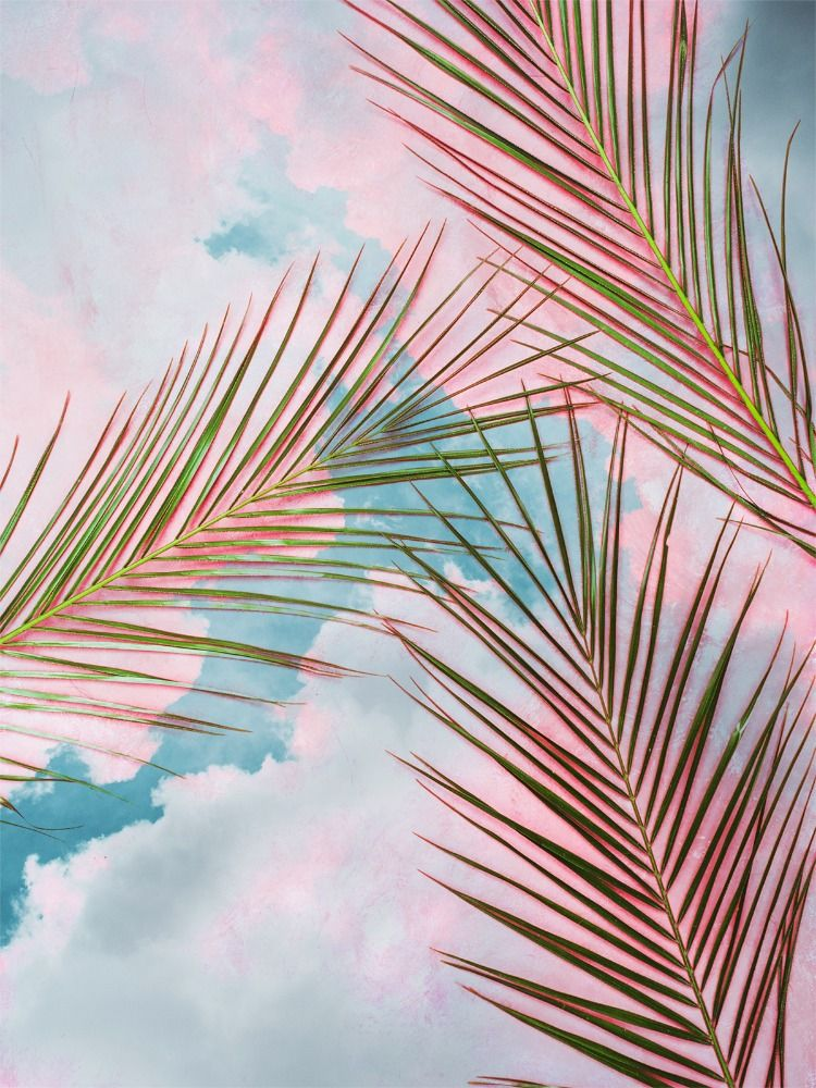 Palms Sky Art Print By 83 Oranges Graphic Design Digital