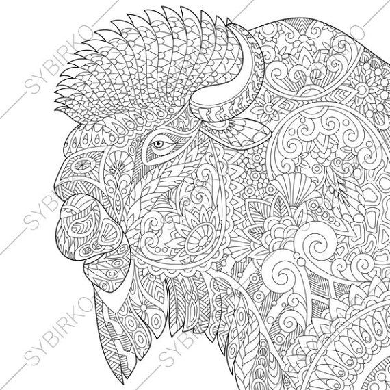 Adult Coloring Pages Buffalo Bison By ColoringPageExpress