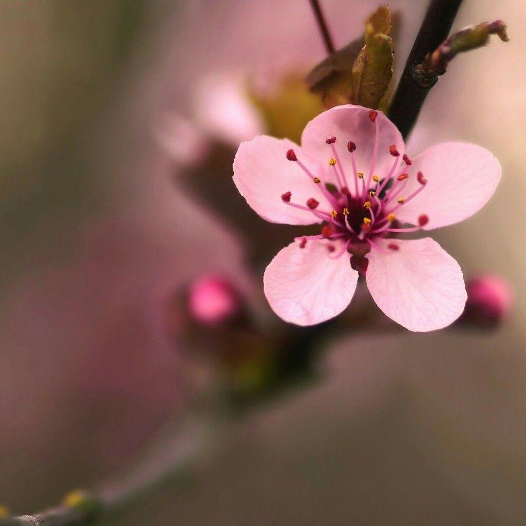 Pin by rosette honda on nature pinterest