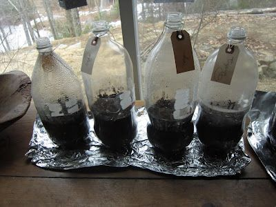 Bohemian Pages: soda bottle greenhouses are amazing