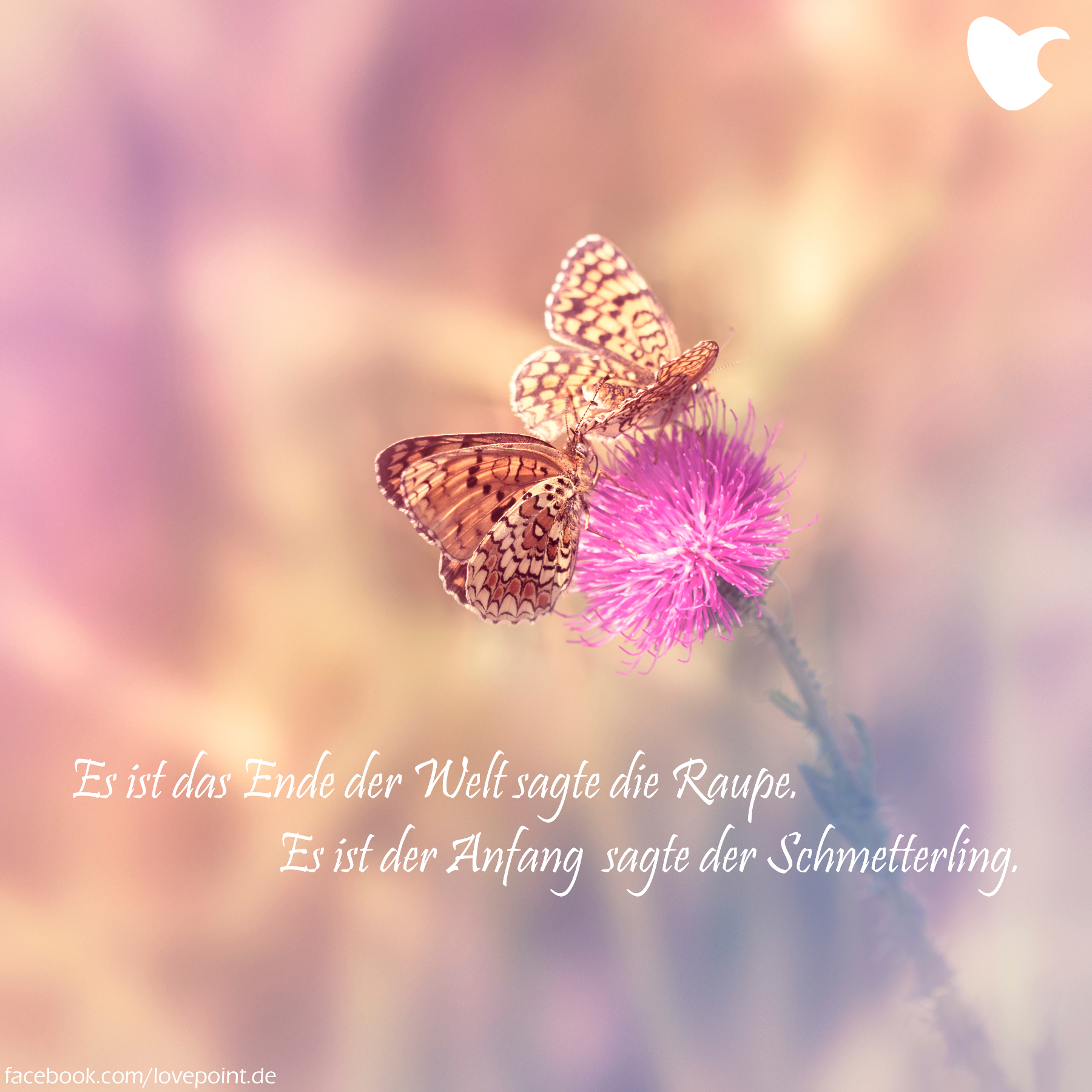 Es Ist Das Ender Der Welt Sagte Die Raupe Es Ist Der Anfang Sagte Der Schmetterling Schmetterling Zitate Frieden Zitate Weisheiten Spruche