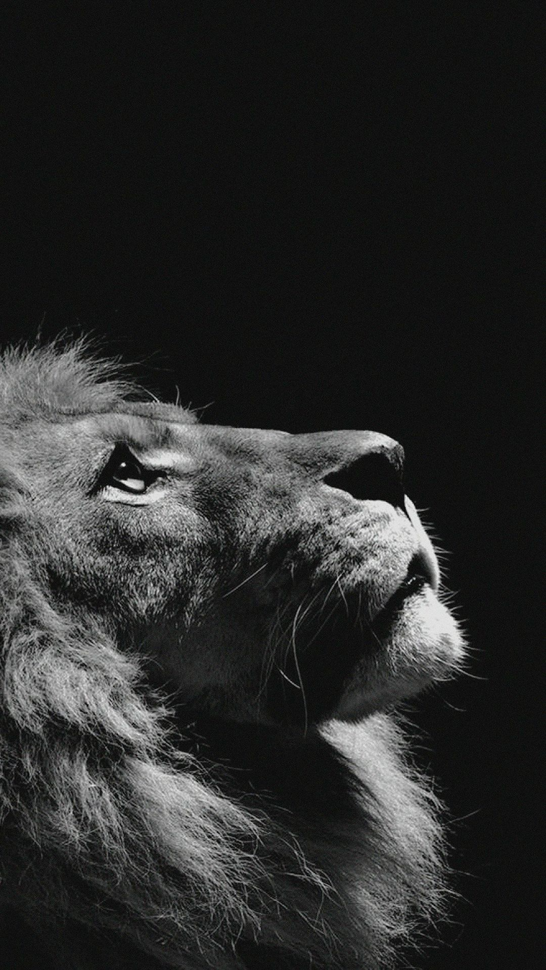 Lion Iphone Android Iphone Desktop Hd Backgrounds Wallpapers 1080p 4k 124964 Hdwallpa Iphone Wallpaper Photography Animal Wallpaper Dark Wallpaper