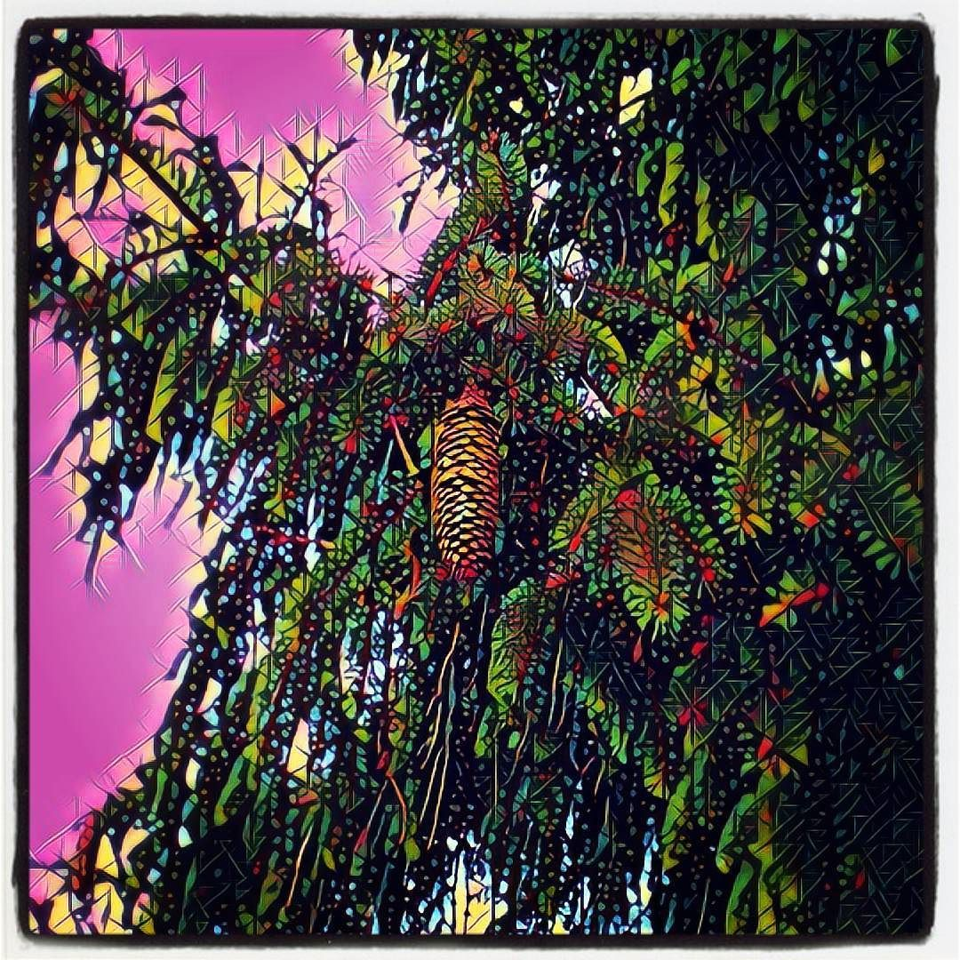 Day 53/365 lookit that special little pinecone. #yearofcreativehabits #tumblr #artistoninstagram #prisma #art #artwork #photoaday #photoadaychallenge #photography #nature #tree