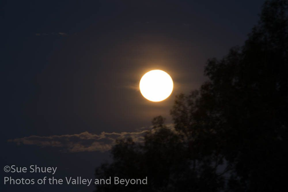 Strawberry Moon on the Summer Solstice