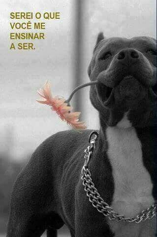 Porque não existem animais maus.  Existe donos ruins !