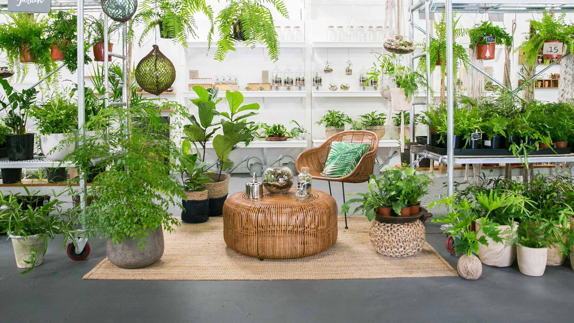 The Best Places to Buy Plants in Brisbane | Concrete ...