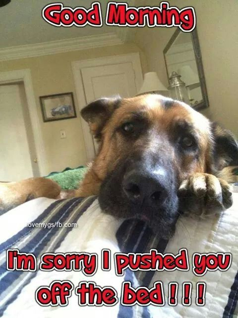 Good Morning I M Sorry Funny Animal Pictures Cute Funny Animals Funny Animal Memes