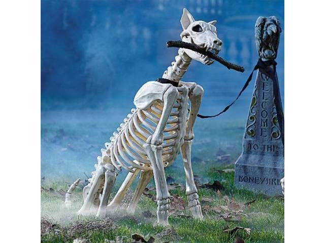 spike the skeleton dog