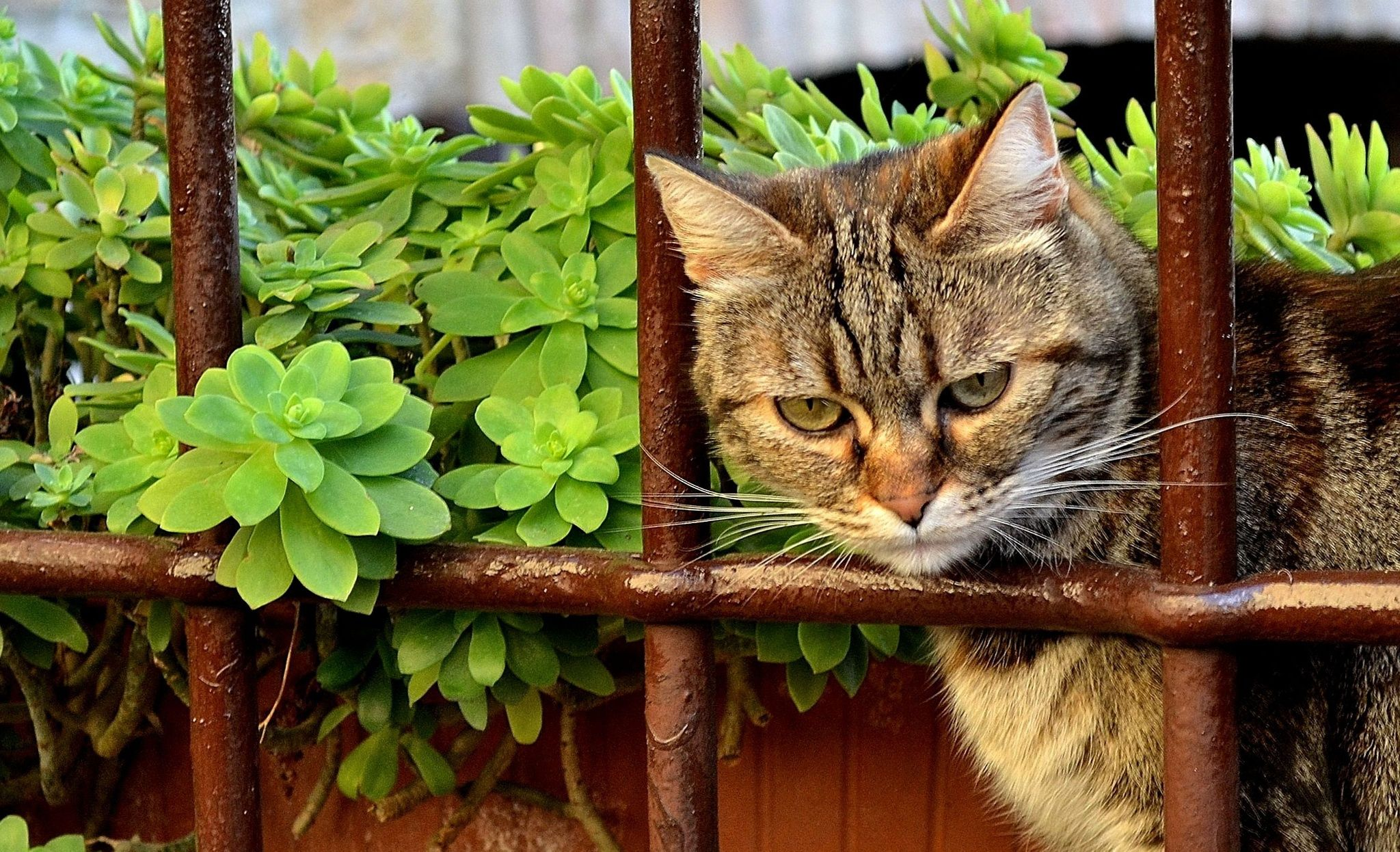 The cat behind bars by Eleonora Albasi on 500px