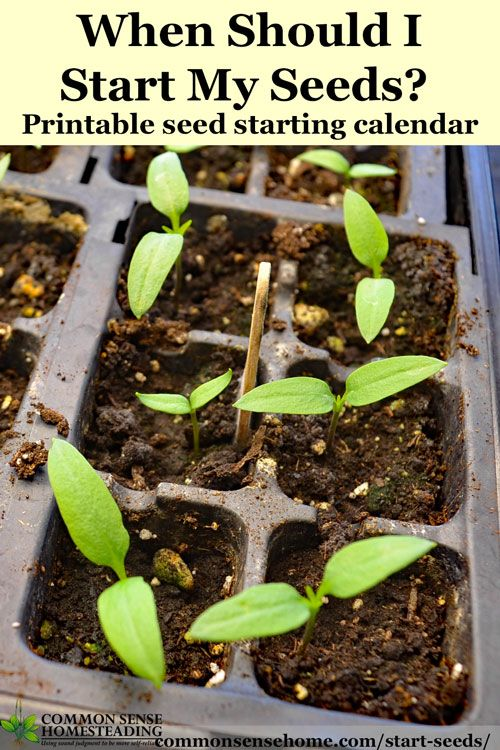 photo about Printable Seed Starting Chart known as Though Need to I Commence Seeds? Printable Charts for Planting