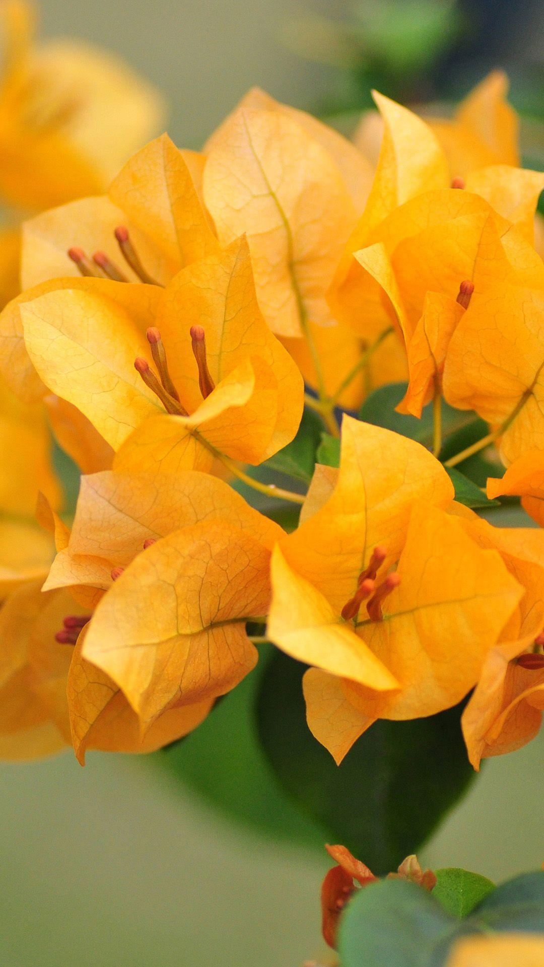 Plus Yellow Wallpaper iPhone 6 Bing images