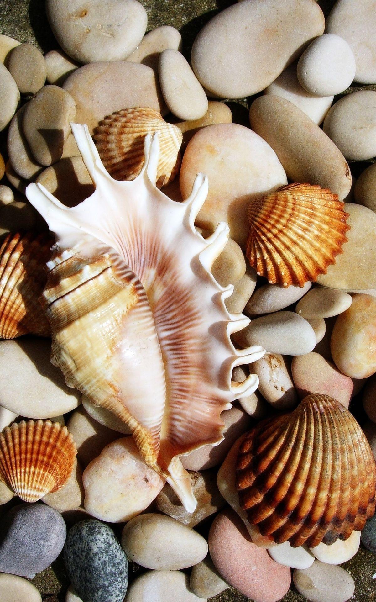 Gifts from the ocean seashells on rocks sea shells