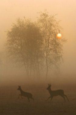 Serene: deer in a foggy landscape