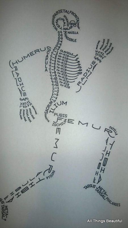 Humanbiologie Studieren
