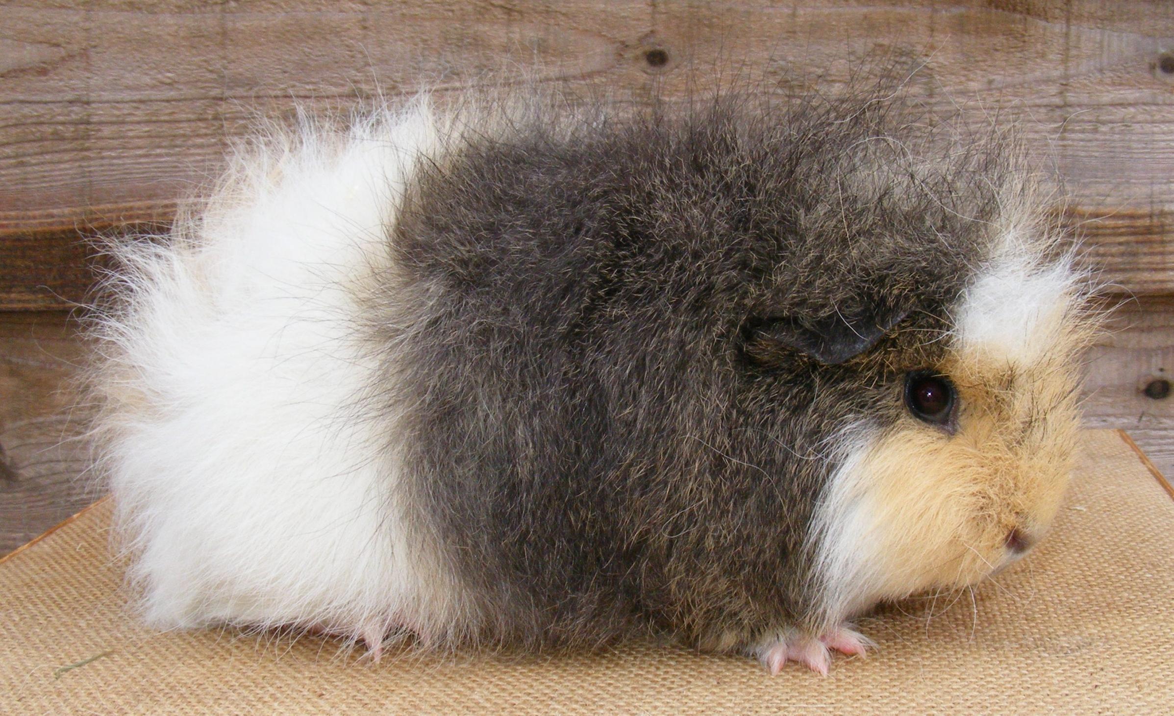 Pin On Small Animals