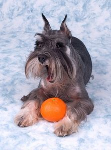 Your dog can eat healthy, too! List of fruits and vegetables a dog can eat.