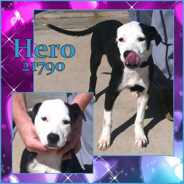 Pin on SAFE/RESCUED!!!