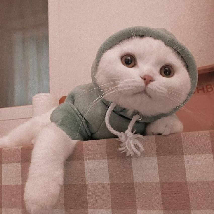 12 Cute Cats Aesthetic | Cute cat memes, Cute baby cats ...