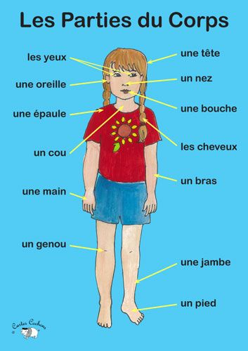Poster - Les Parties du Corps - Little Linguist