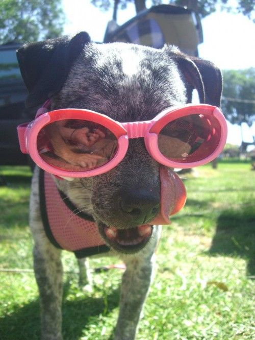 One goofy lookin' pup! Click to view: 25 Animals Who Are Stoked For Summer!