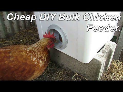 Voeding van kippen | Levende Have