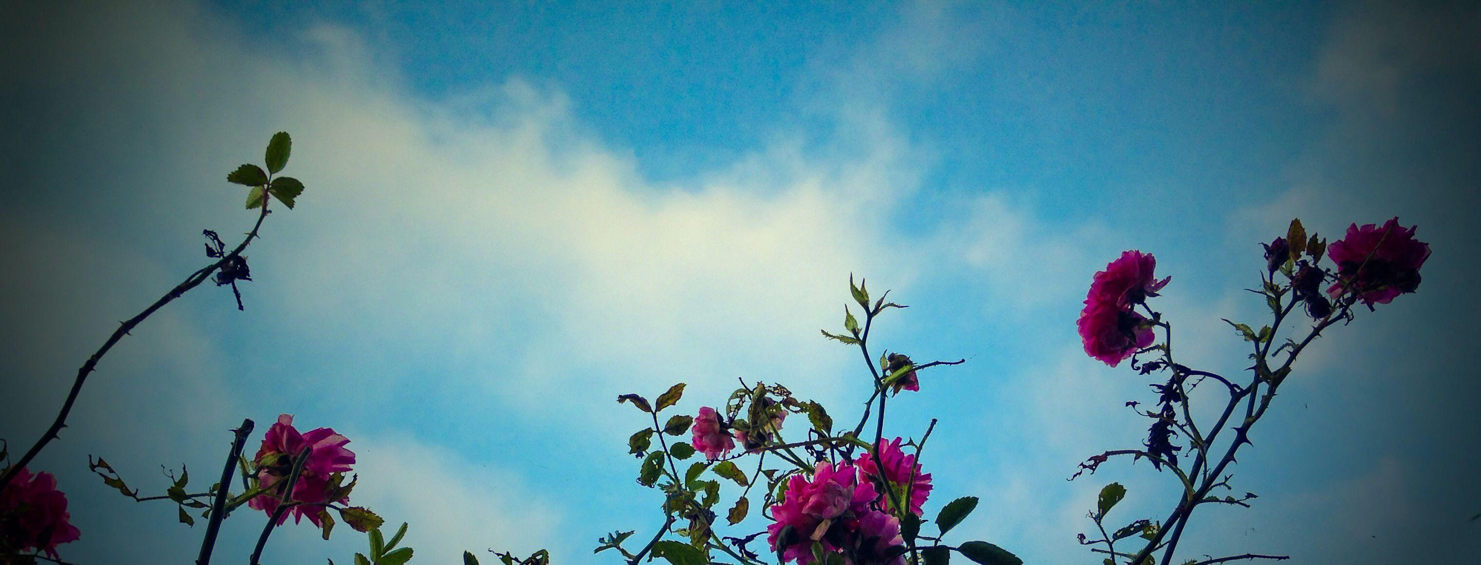 Rosas y cielo. Andrés Montañez