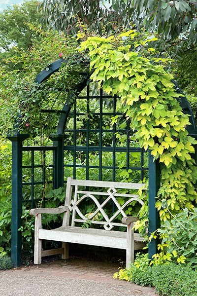 Perennial Picks That Make Quick Climbers Garden Arches Garden