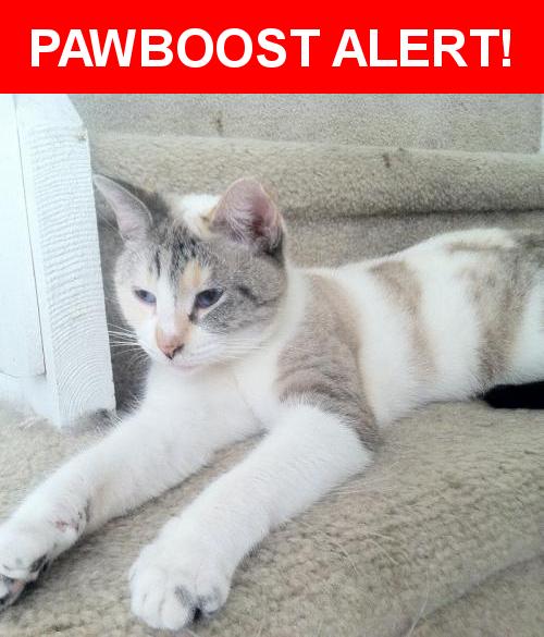 Please spread the word! Sophie was last seen in Princeton, FL 33032.    Nearest Address: Near Ln and 108 Pl
