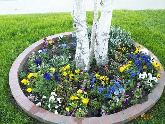 ideas on flowers around a tree ideas for around trees victory garden and flowers - Flower Garden Ideas For Under A Tree