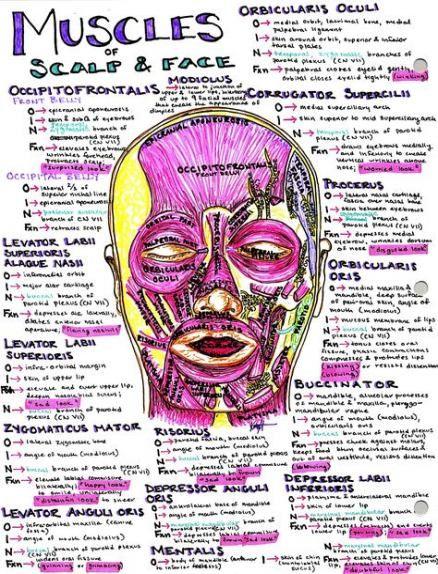 Medical notes nursing schools 39 Ideas #medical