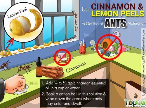 How To Get Rid Of Ants Get Rid Of Ants Rid Of Ants Ants