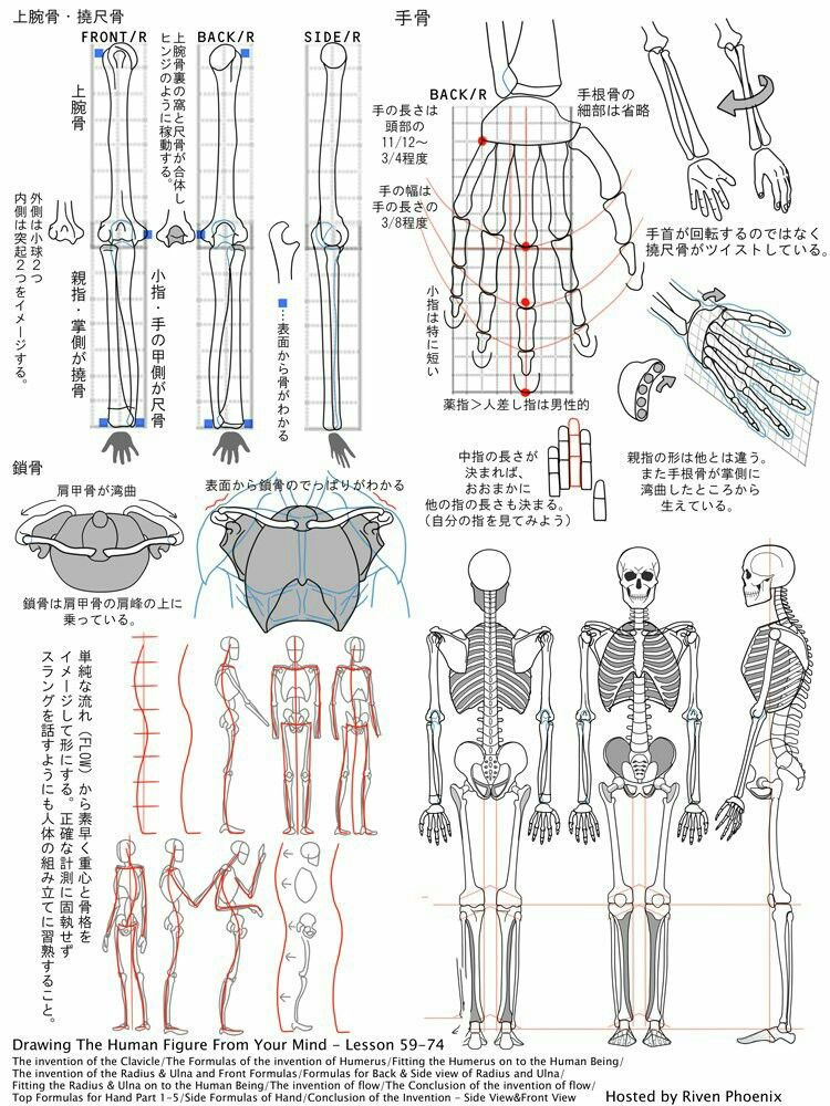 Pin By On Pinterest Anatomy Drawings