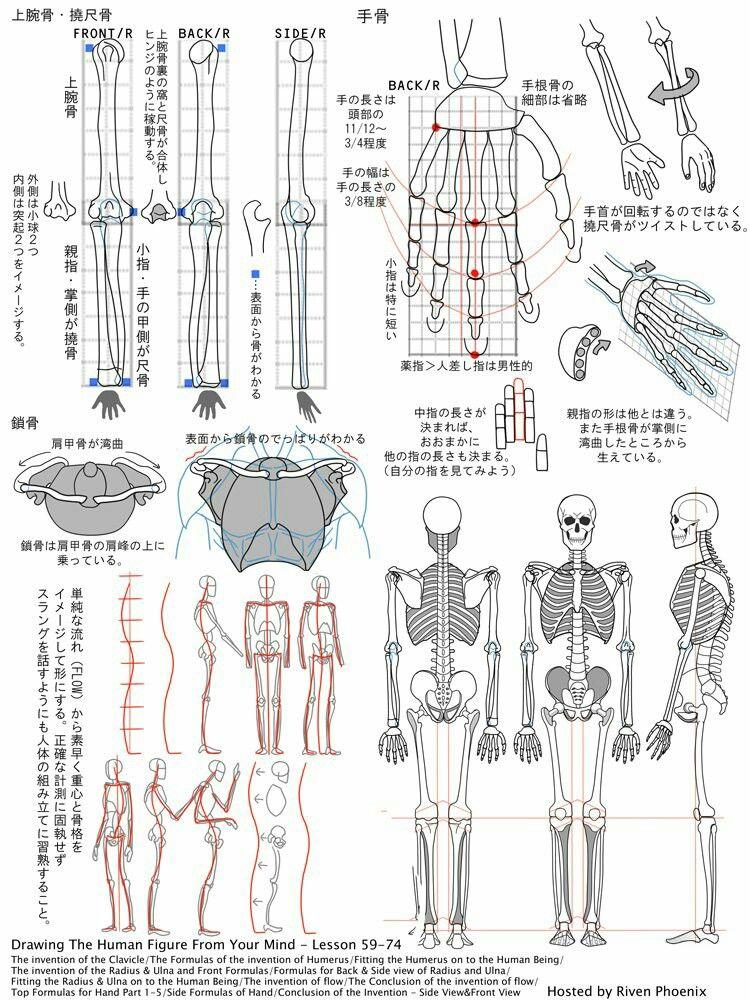 Pin de animee kun en draw | Pinterest | Anatomía, Anatomía humana y ...