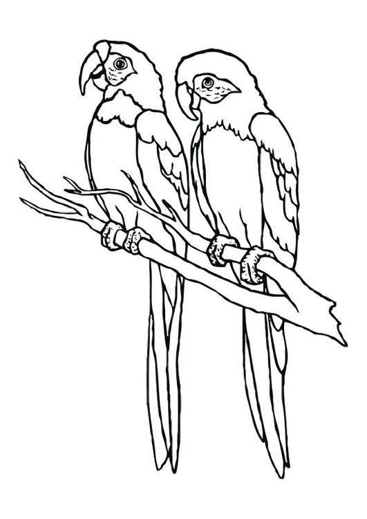 Dibujo Para Colorear Papagayo Ilustracion Imagenes Para