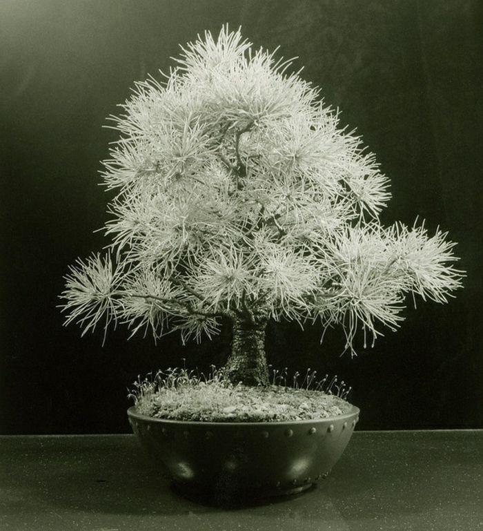 wundersch ne bonsai baum kompositionen pinterest. Black Bedroom Furniture Sets. Home Design Ideas