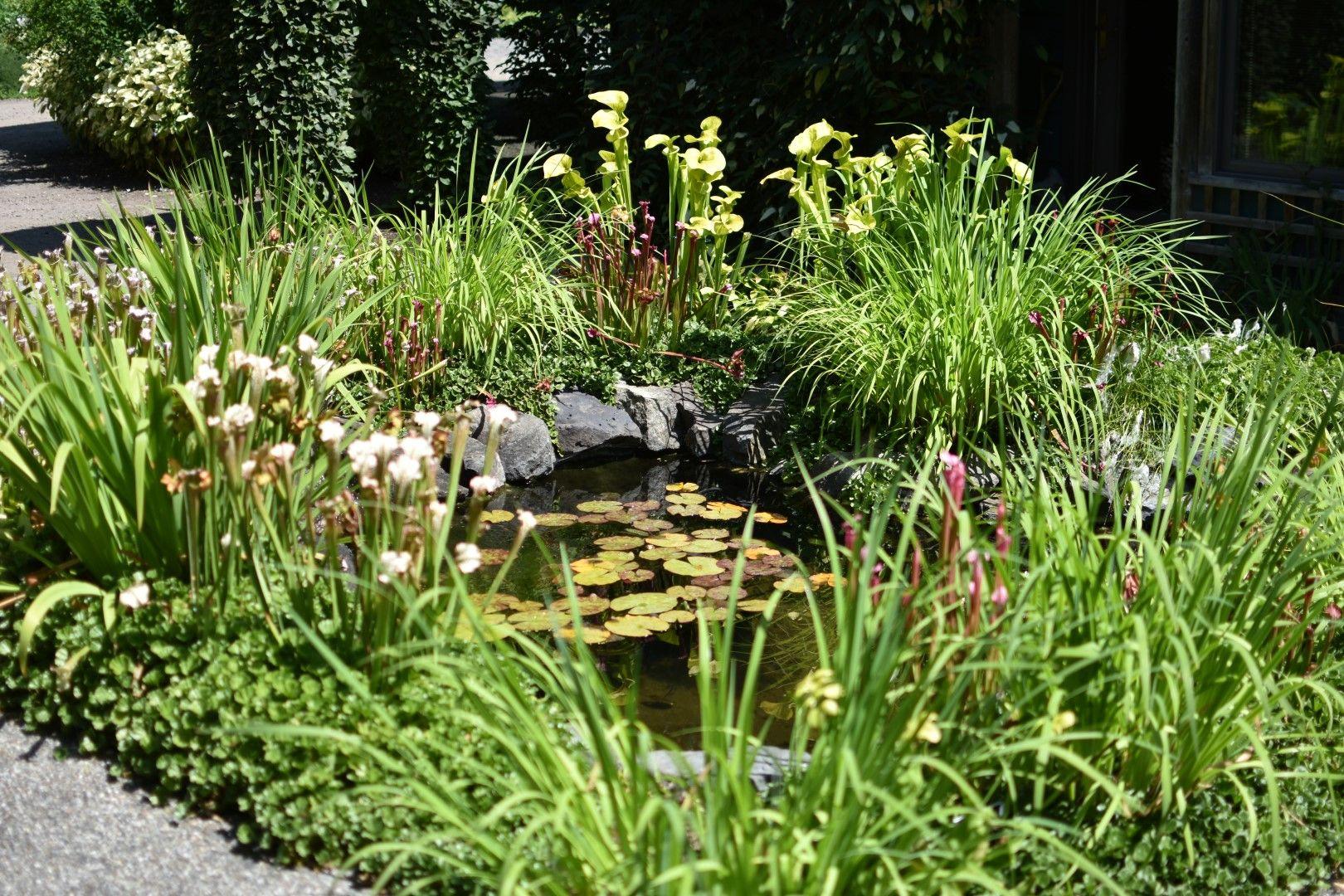 A Bog Garden Bog Garden Carnivorous Plants Beautiful Gardens