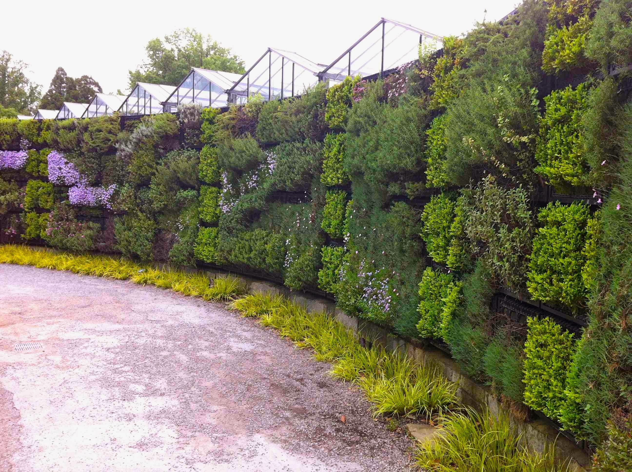 A Beautiful Living Wall At The Atlanta Botanical Garden Planted With  Various Herbs And Medicinal Plants