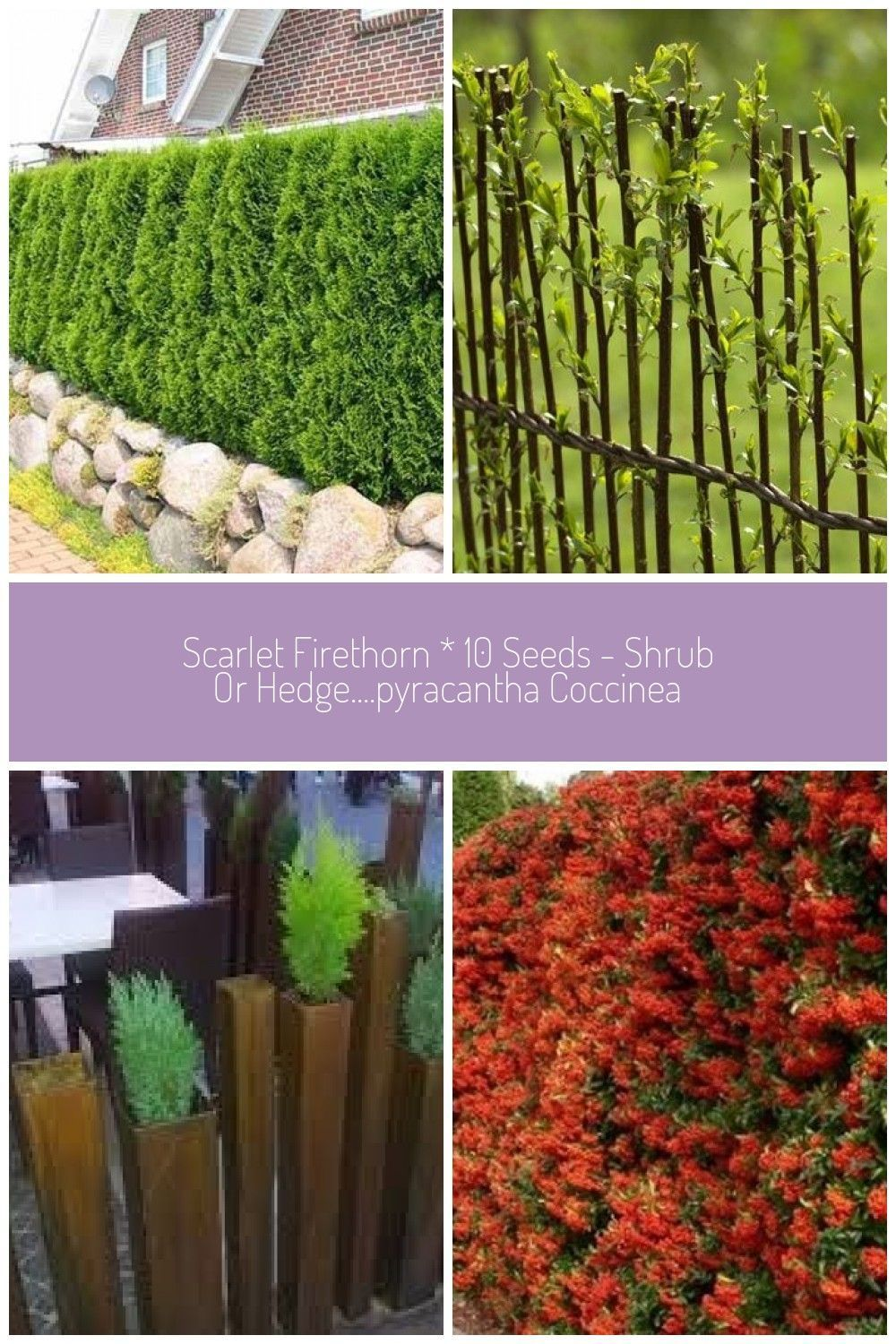 Green Fence Hedge Climbing Plants Trees Shrubs Ideas Natural Stone Garden Wall Green Fence Hedge Climbing P In 2020 Trees To Plant Climbing Plants Green Fence