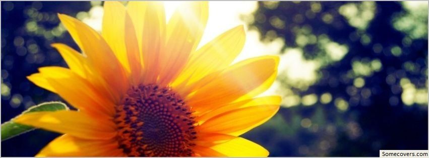 free facebook cover photos - Google Search