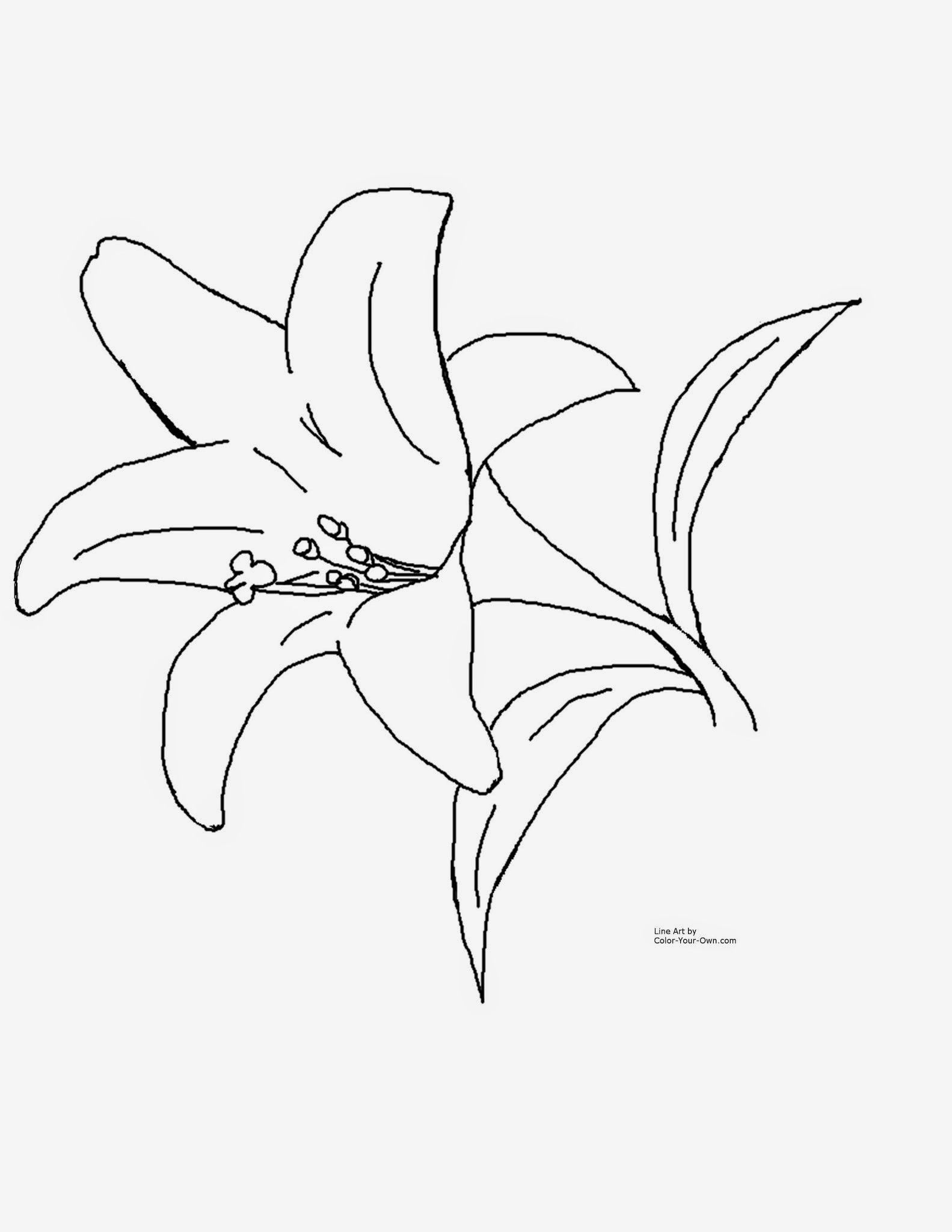 Spring Flowers Coloring Pages 2