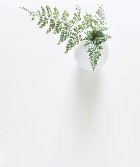 einsteinsuke bl tter bl ten pinterest pflanzen blumendekoration und bl ten. Black Bedroom Furniture Sets. Home Design Ideas