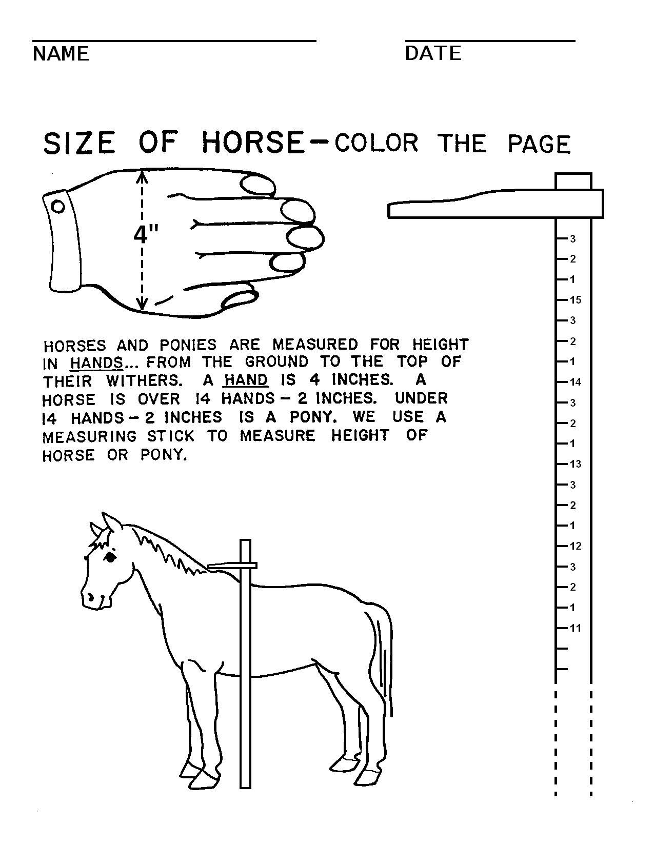 Horse Camp Worksheets With Images Horse Lessons Horses Horse