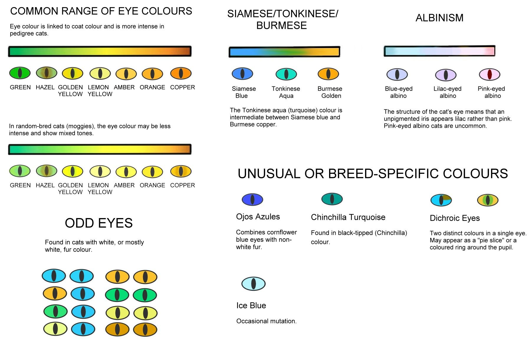 Colour and pattern charts with images cat eye colors