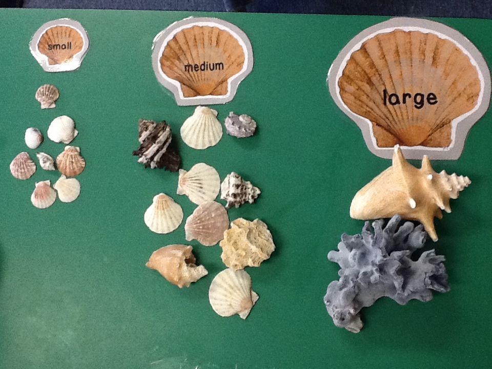 pour les casiers Montessori, souvenirs de la plage pour un petit tri ...