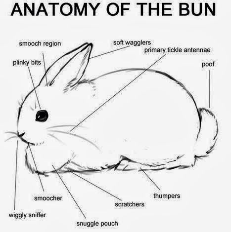 Pin by Katie Honas on Animals ... mostly Bunnies | Pinterest ...