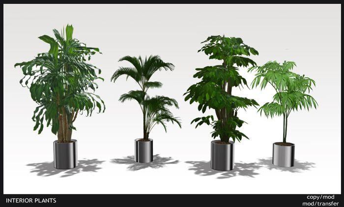 Office Plants Large