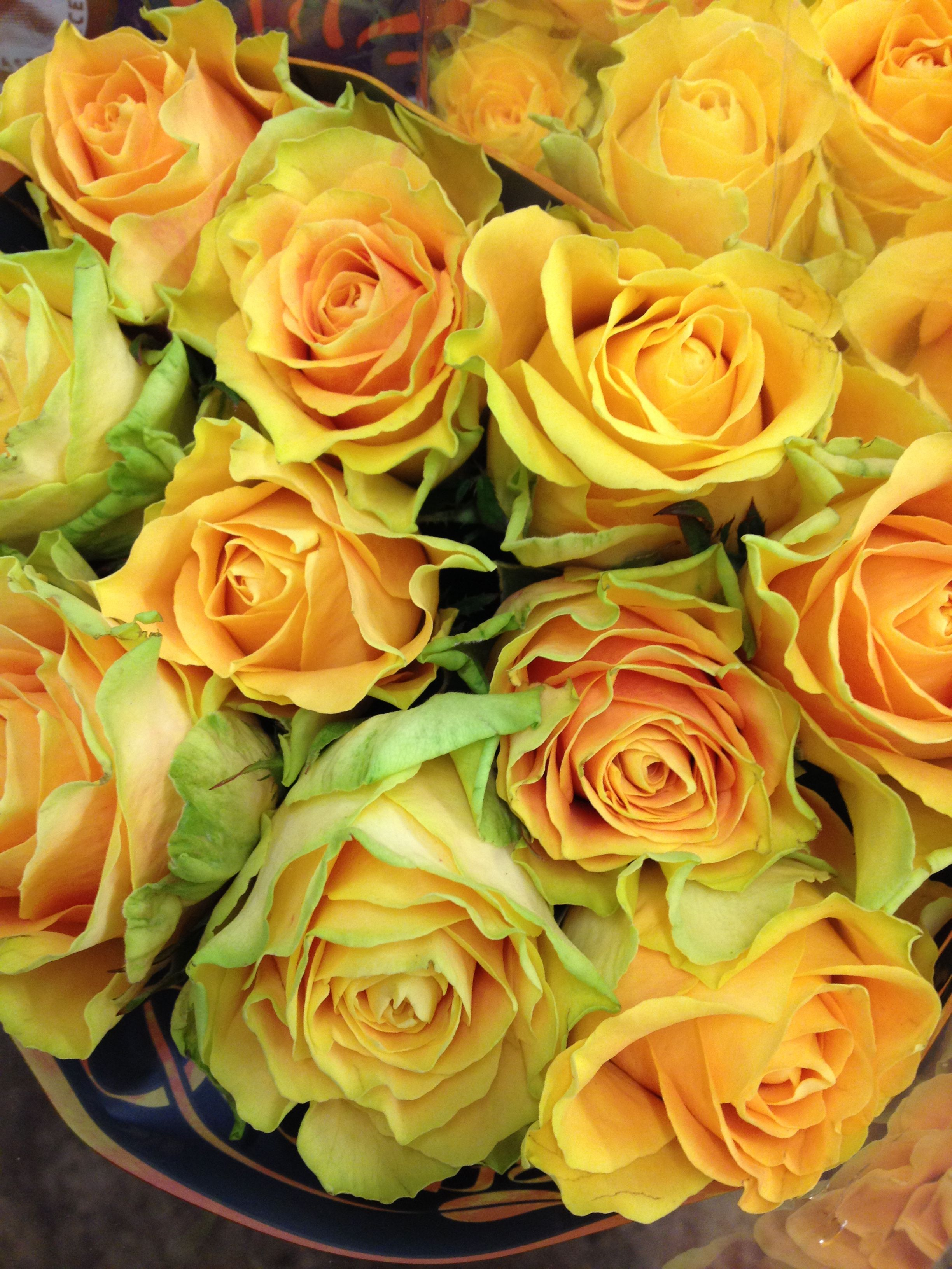 Rose Yellow Cubald In Bunches Of 20 Stems From The
