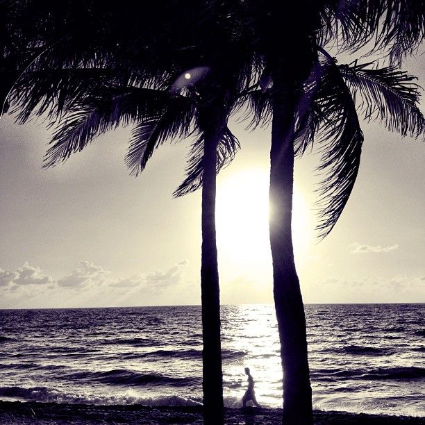 """""""Walking by palms in the sun."""""""