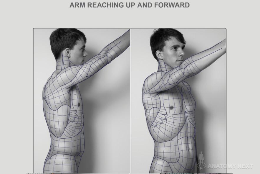 Anatomy Next - Anatomy of Torso: Block-outs   Anatomy ref ...